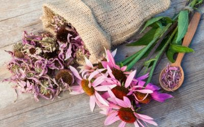 Echinacea for Wellness