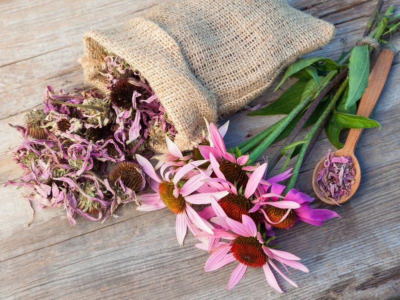 Holistic health retreat in Florida - Echinacea for Wellness